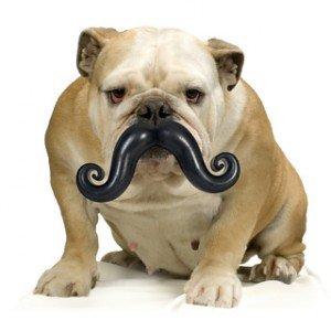 1014 Top 20 des accessoires pour chiens les plus insolites