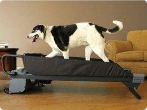 1413 Top 20 des accessoires pour chiens les plus insolites