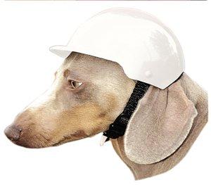 199 Top 20 des accessoires pour chiens les plus insolites