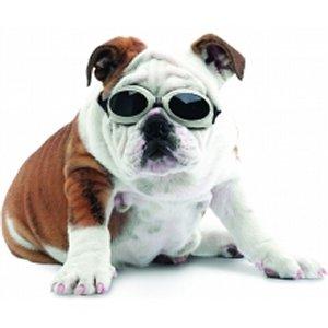 329 Top 20 des accessoires pour chiens les plus insolites