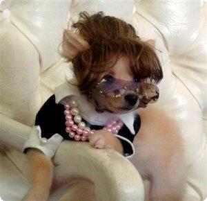 915 Top 20 des accessoires pour chiens les plus insolites