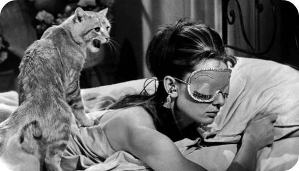 chat 1 Top 10 des chats les plus célèbres du cinéma