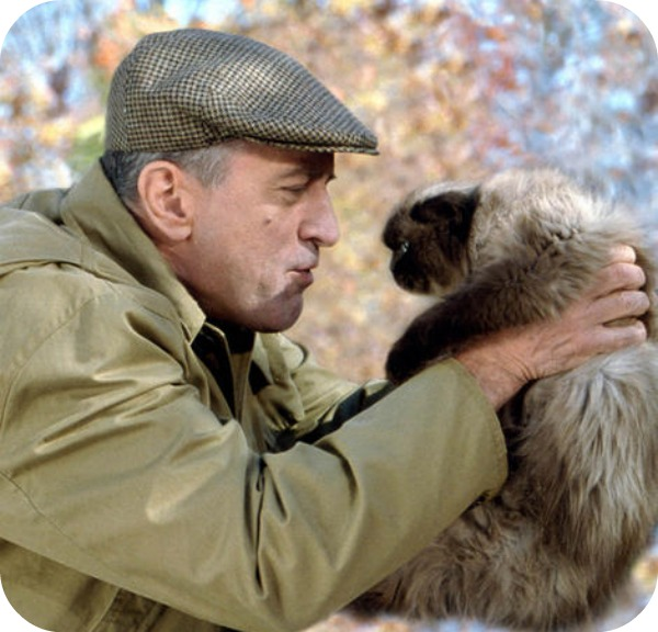 chat 3 Top 10 des chats les plus célèbres du cinéma