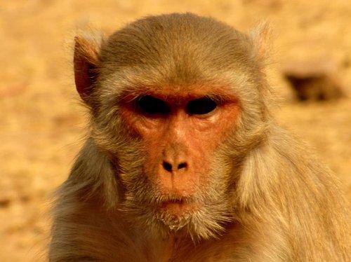 Complot001 Top 15 des animaux qui ourdissent un complot planétaire