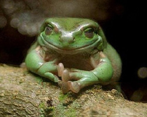 Complot010 Top 15 des animaux qui ourdissent un complot planétaire