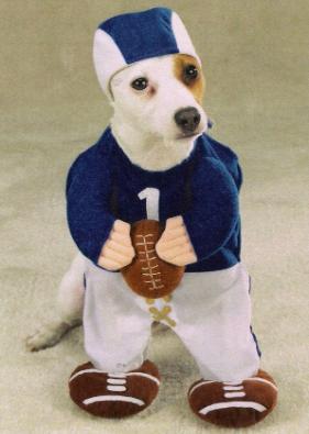 déguisement chien
